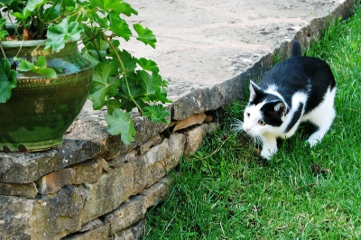 Our cat : Nenette playing in the garden